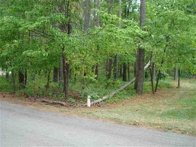 Photo of Island Pine